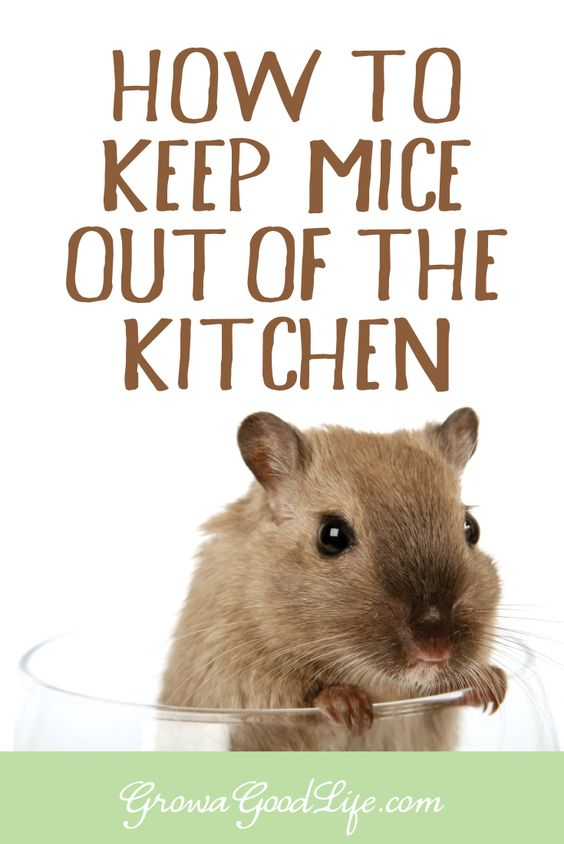 How To Get Rid Of Mice In Basement 28 Images