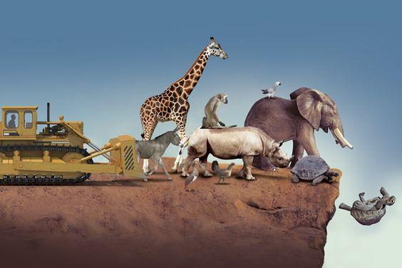 Pérdida de especies de vertebrados compromete futuro de humanidad afirma experto