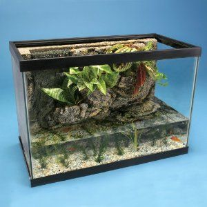 A riverbank fish tank makes an amazing frog habitat for for Fish tank frogs