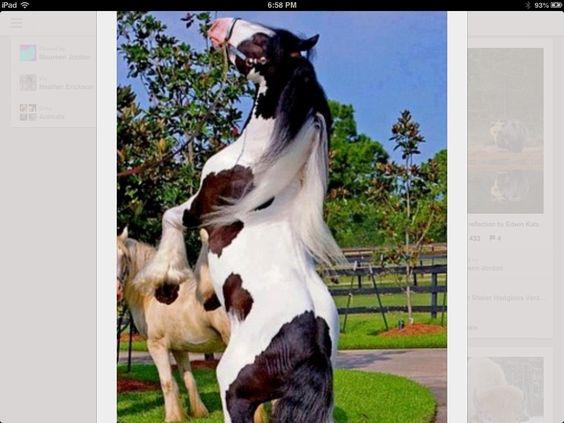 Amazing horse!