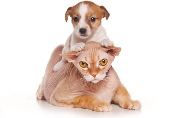 a dog is ride on cat
