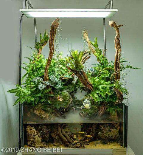 2019 Aga Aquascaping Contest 111 In 2020 Aquascape Amazing Aquariums Aquatic Plants