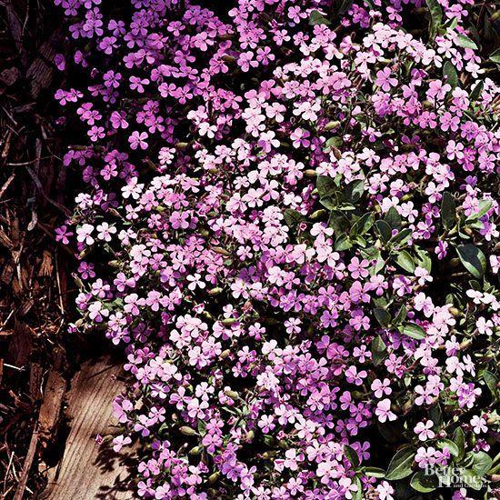 Sun Summer And Perennials On Pinterest