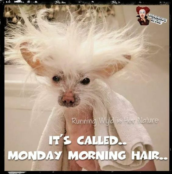 Monday morning hair: