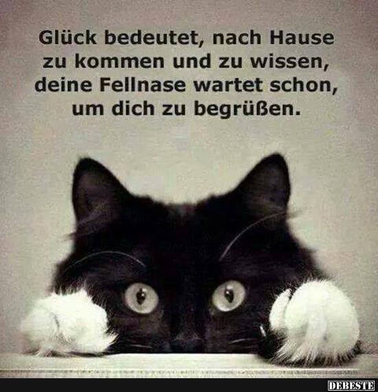 Gluck Bedeutet Nach Hause Zu Kommen Spruche Katze Katzen Zitate Katzen Lustige Spruche