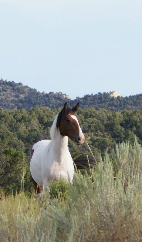 Pictures of the Wild Mustangs - Friendsofthemustangs.org
