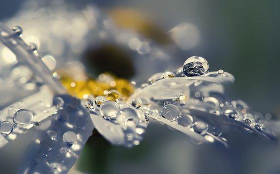 Rain drops on daisy petals - 1920x1200