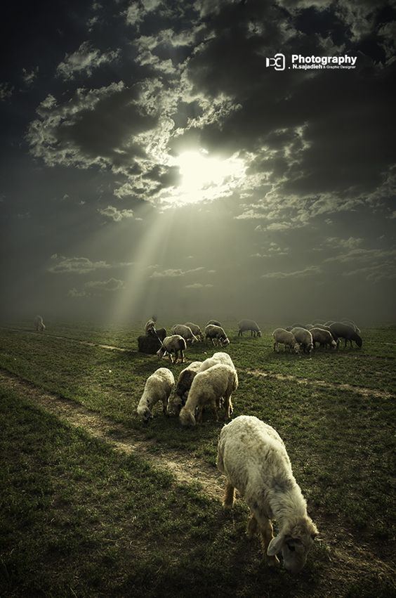 'We are the sheep of His pasture....'