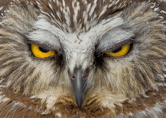 Photograph Angry bird by Maxime Riendeau on 500px
