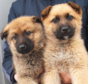 APA SOS VITORIA: Asociación Protectora de Animales SOS Vitoria