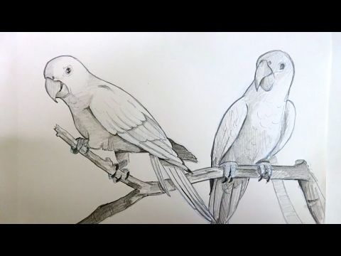 Drawing A Love Bird With Simple Colored Pencils Youtube