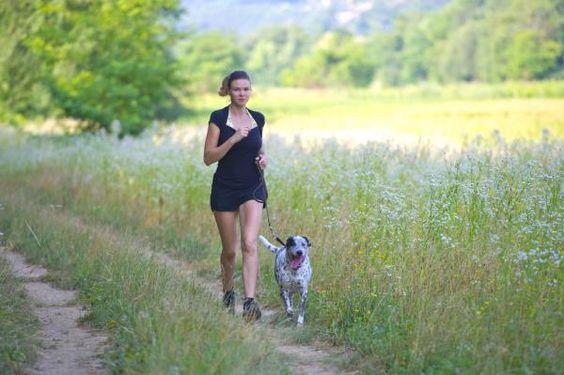 Top 10 Der Trainingsprogramme, Die Du Mit Deinem Hund Machen Kannst