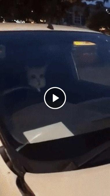 Cara não entre no seu carro agora, tem dois indivíduos lá dentro