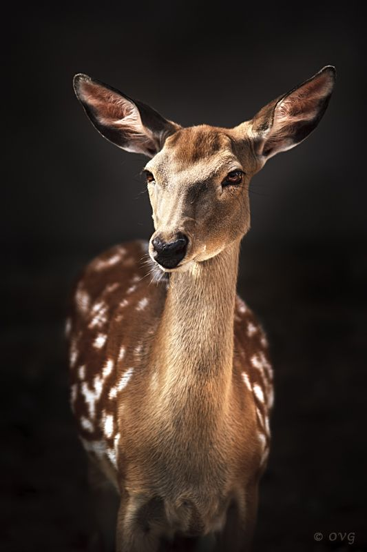 We have deer in our hills. They love our blooming agapanthus and I wouldn't have it any other way.