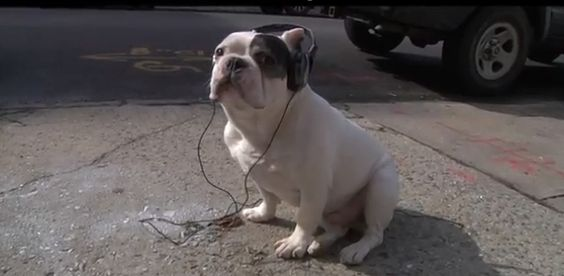 Cute dog listening to a sad song...