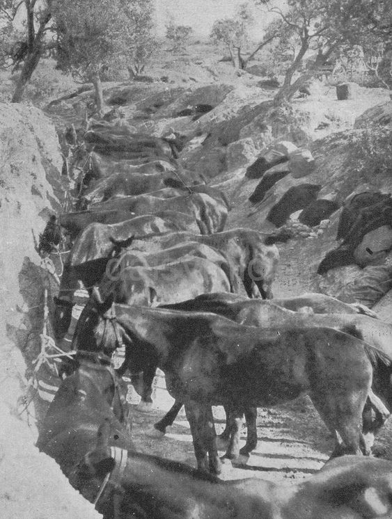 £2.51 GBP - British Army Cavalry Horses Trench Gallipoli World War 1 5X4