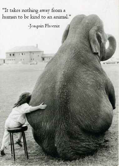 """""""It takes nothing away from a human to be kind to an animal."""" Joaquin Phoenix in Earthlings:"""
