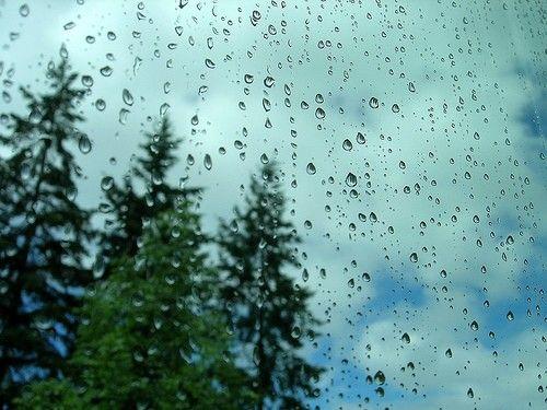 Resultado de imagen para bosque con lluvia