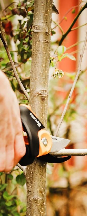 Spring is coming! Easily learn tips on how and when to prune trees, bushes, shrubs, flowers and plants, as well as the benefits of pruning! Don't miss this informative tutorial.