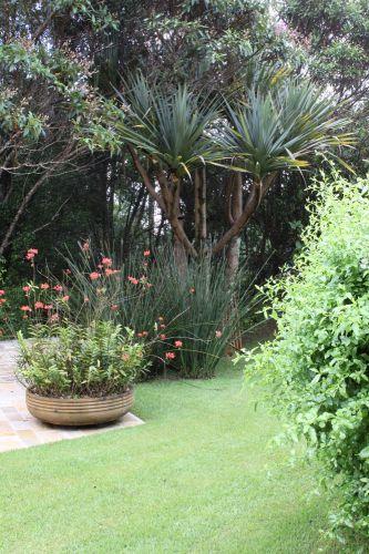 Atrás do vaso com orquídeas epidendrom, pé de estrelitzia (<i>Strelitzia Juncea</i>) e, ao fundo, o belo desenho da Pândano (<i>Pandanus Útilis</i>). A quaresmeira roxa compõe o fundo da paisagem. À direita da foto, uma touceira de Bela Emilia (<i>Plumbago</i>) que protege a piscina de quem passa pela rua.