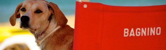 Rimini Mare Spiaggia Per Cani Cani E Bagnino
