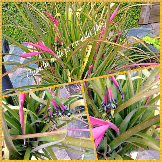 No se qué planta es ,pero tiene una flor hermosa.