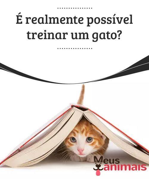 Treinar Um Gato E Possivel Saiba Os Detalhes Aqui Gatos