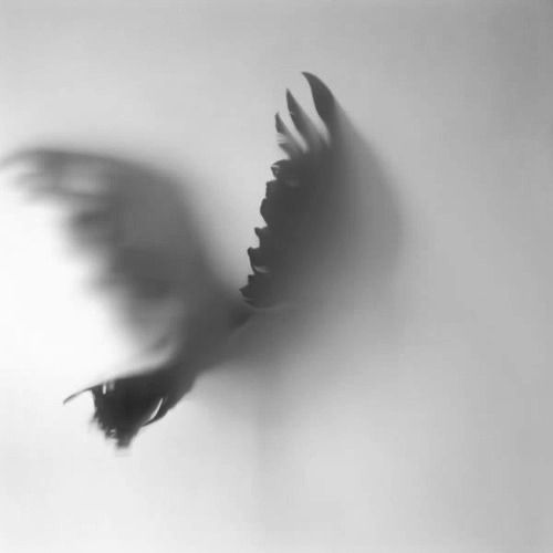 'Believer' from the Lost Birds Series by Patricia Von Ah