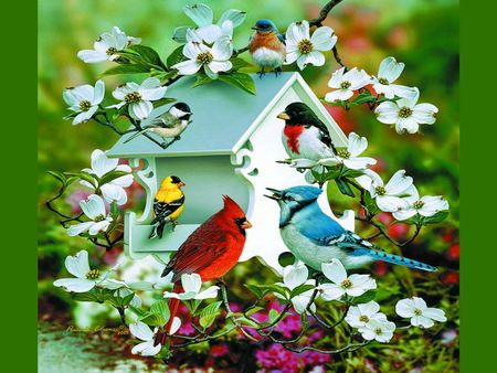 Spring Birds - Cardinal, Chickadee, Bluejay, Finch, Robin