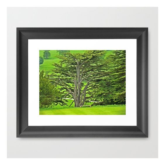 Old English Tree 1 Framed Art Print ($38) ❤ liked on Polyvore featuring home, home decor, wall art and framed art prints