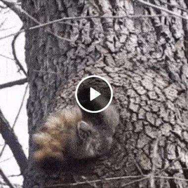 Animal dando trabalho para entrar no buraco