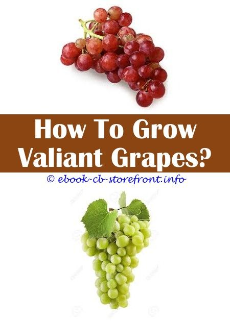 13 Incomparable How To Grow Concord Grape Seeds Admirable