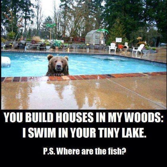 Bear in Swimming pool..