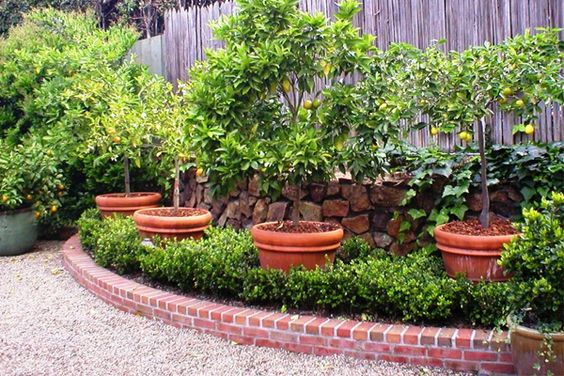 Monica helps many clients incorporate edible plants into for Ornamental kitchen garden design
