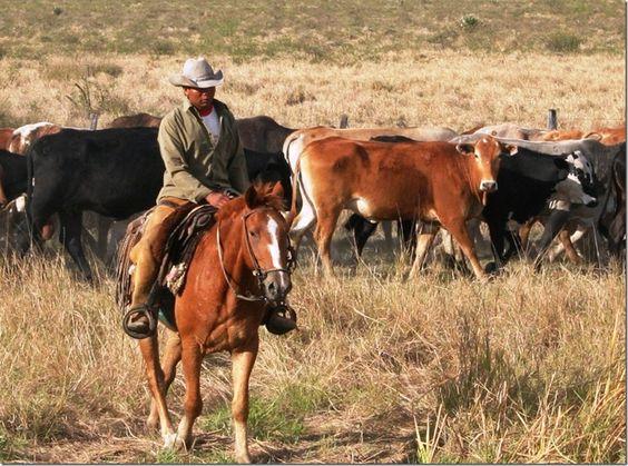 The Paraguayan Chaco - travelogue with photos - World Adventurers (worldadventurers.wordpress.com) [60 photos]