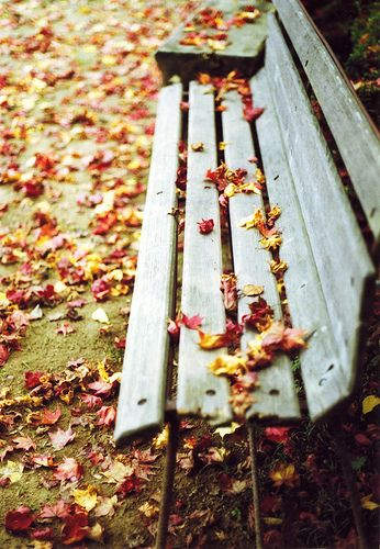 Leaves + bench.