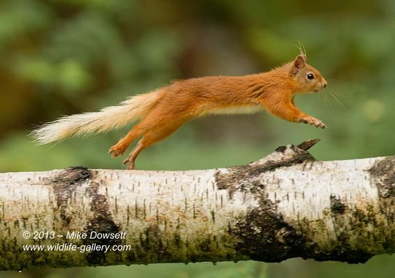 Speedy Red by Mike Dowsett on 500px