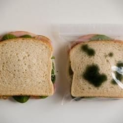 Anti-Theft Lunchbags