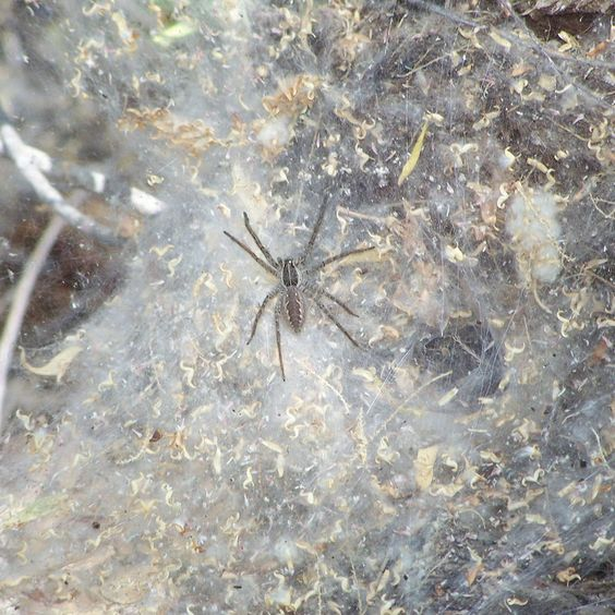Do you think Spider deserves to win 2013 - 2014 Arizona Highways Online Photography Contest? Have your say!