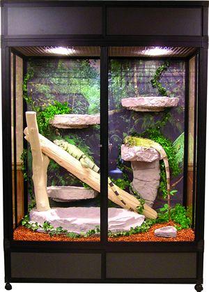 Iguanas, Chameleons and Iguana cage on Pinterest