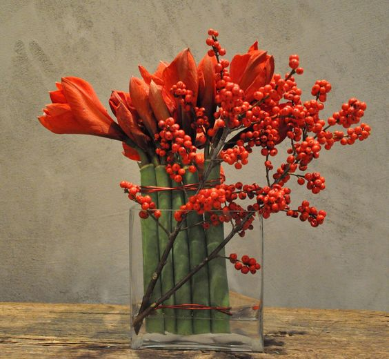 Amaryllis ilex verticilata holiday decorating for Amaryllis christmas decoration