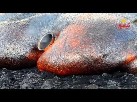 شاهد واستمتع مع التصوير البطيئ فيديو بالتصوير البطئي Fish Animals Walrus