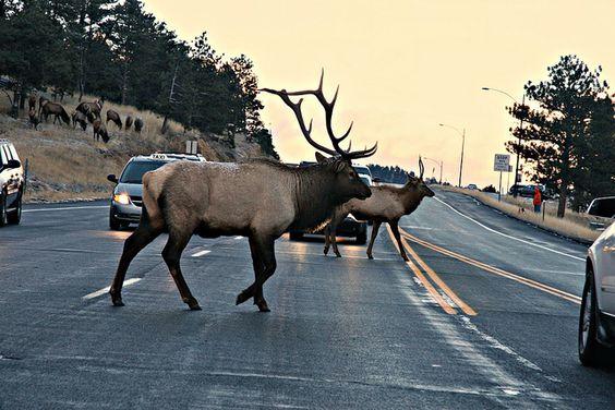Colorado Traffic Jam by Joel M. Hoffman, via Flickr
