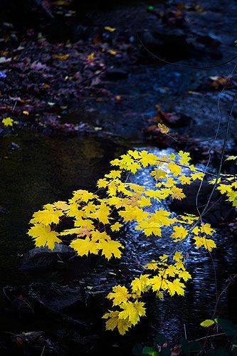 Fall colors line Little Deer Creek in Nevada City.