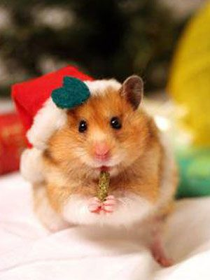 Christmas Pet Photo Contest at WomansDay.com - Giveaways - Woman's Day