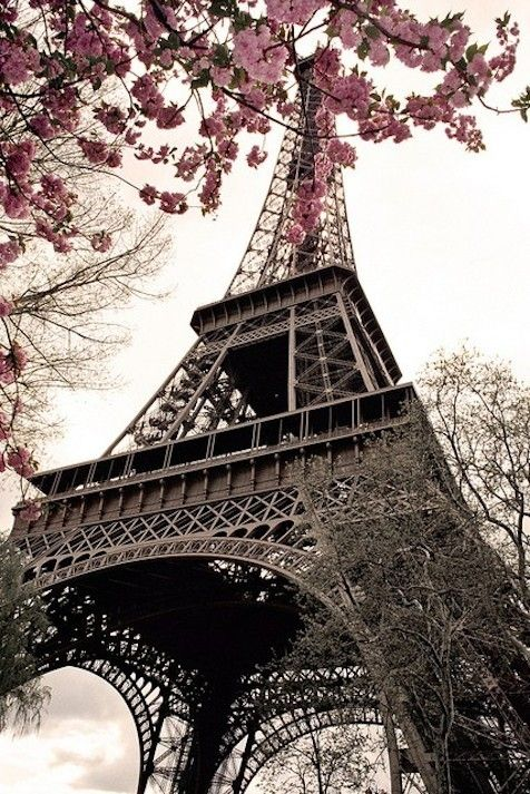 paris france with spring pink blossom flowers :-) nice