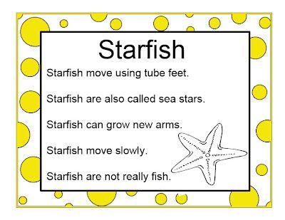 Brilliant bundles preschool starfish activities for an for Fish songs for preschoolers