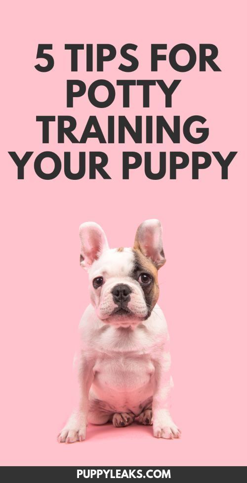 5 Simple Tips For Potty Training Your Puppy Training Your Puppy