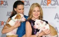 Hilary Swank and Edie Falco Honored At ASPCA Ball | Ecorazzi