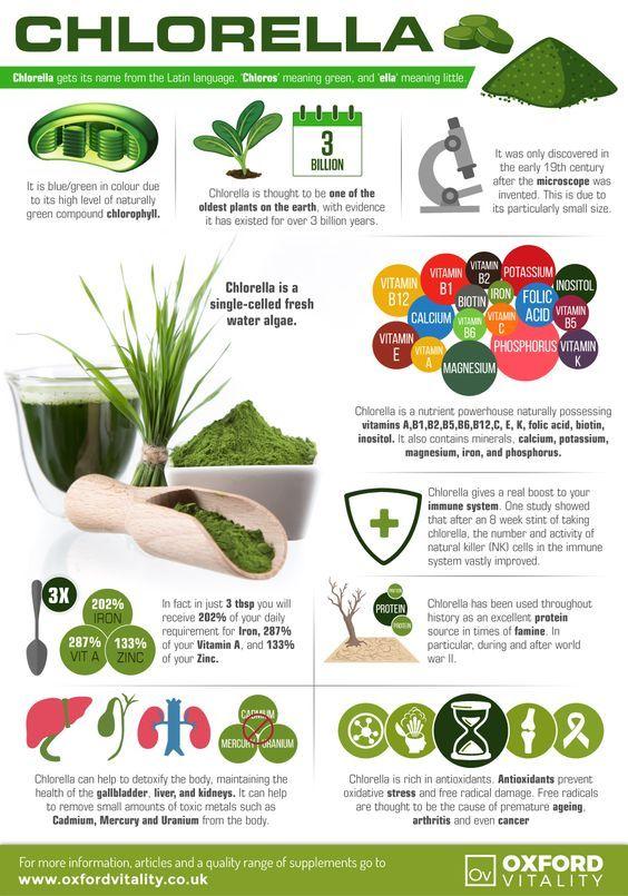 chlorella alga fogyás étrend minta